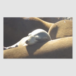 Baby Sea Lion Sleeping Rectangular Sticker