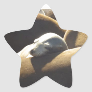 Baby Sea Lion Sleeping Star Sticker