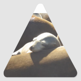 Baby Sea Lion Sleeping Triangle Sticker