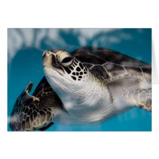 Baby Sea Turtle Card