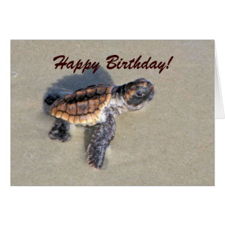 Baby Sea Turtle, Just Hatched Card