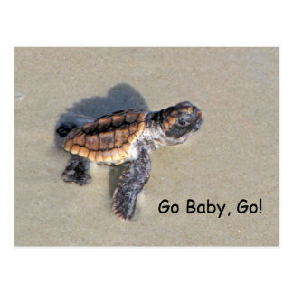 Baby Sea Turtle, Just Hatched Post Card