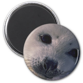 baby Seal Refrigerator Magnet