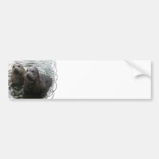 Baby Seals Bumper Sticker