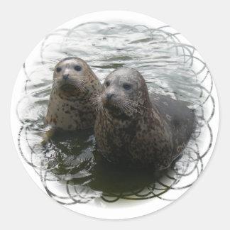 Baby Seals Sticker