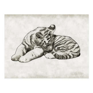 baby sleeping white tiger cat postcard