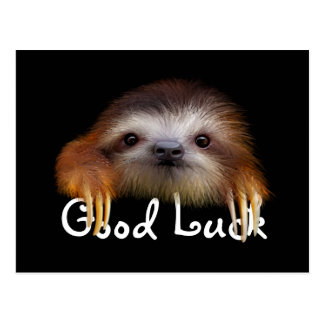 Baby Sloth Good Luck Post Card