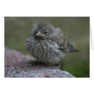 """""""Baby Sparrow"""" Photo Greeting Card"""