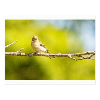 """Baby Sparrow"" postcard"