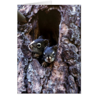 Baby squirrels merry Christmas card