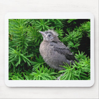 Baby Starling Mouse Pad