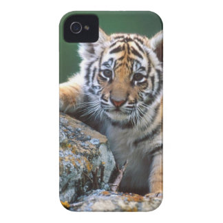 Baby Tiger Cub Case-Mate iPhone 4 Case