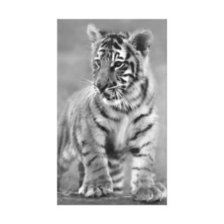 Baby Tiger in Black and white Canvas Prints