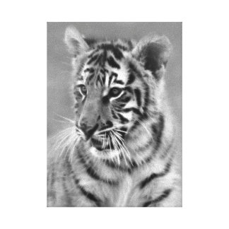 Baby Tiger in Black and white cub Canvas Prints