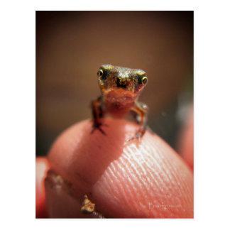 Baby Toad / Tadpole Postcard