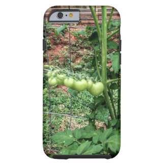 Baby Tomato Tough iPhone 6 Case
