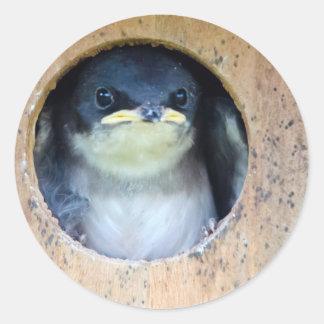 Baby Tree Swallow Classic Round Sticker