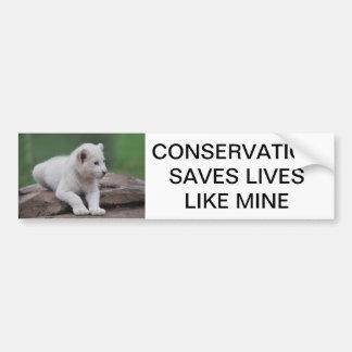 Baby white lion cub 2 bumper sticker