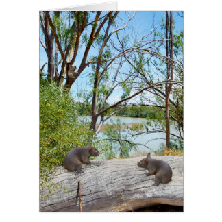 Baby Wombats Playing On A Log, Card