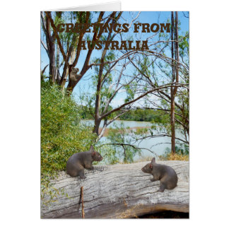 Baby Wombats Playing On A Log, Greeting Card