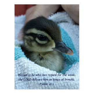 Baby Wood Duck Postcard