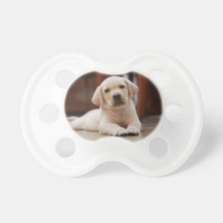 Baby Yellow Labrador Puppy Dog laying on Belly Baby Pacifier