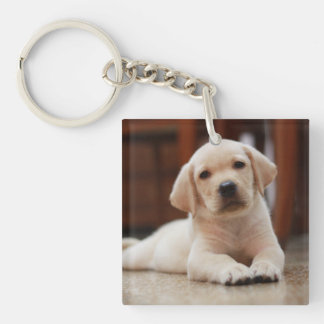 Baby Yellow Labrador Puppy Dog laying on Belly Double-Sided Square Acrylic Key Ring