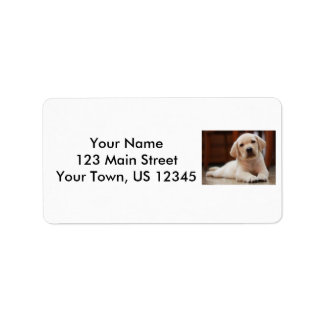 Baby Yellow Labrador Puppy Dog laying on Belly Label