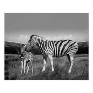 Baby Zebra and mom Print