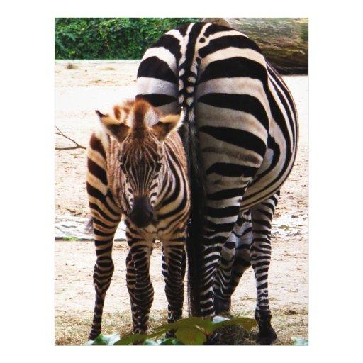 Baby Zebra Custom Flyer