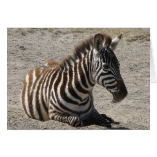 Baby Zebra Greeting Card