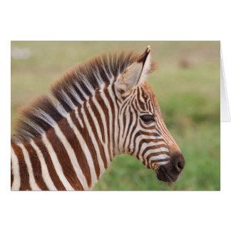 Baby zebra head, Tanzania Card