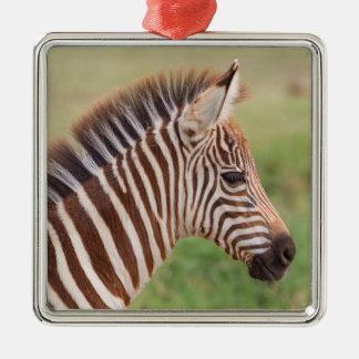 Baby zebra head, Tanzania Metal Ornament