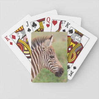 Baby zebra head, Tanzania Playing Cards