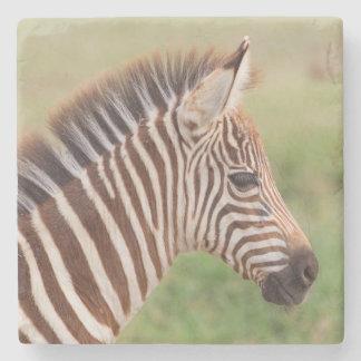 Baby zebra head, Tanzania Stone Coaster