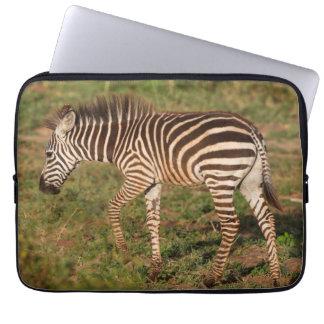 Baby Zebra walking, South Africa Laptop Sleeve