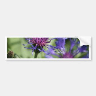 Bachelor Button Plant Bumper Sticker