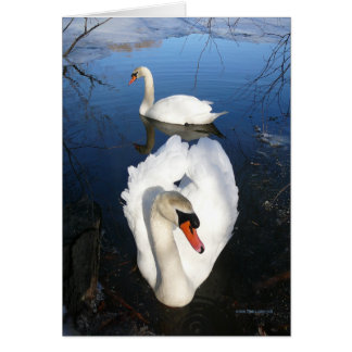 Back Pond Swans Greeting Card