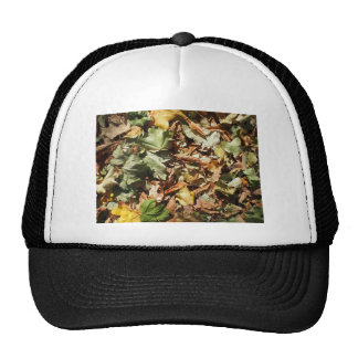 Background of green, yellow and brown maple fallen cap
