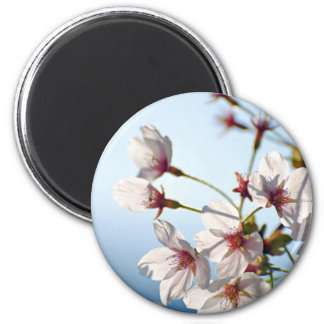 Backlit Cherry Blossoms Magnet