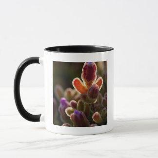 Backlit Colorful Succulent Flower Bud With Rim Mug
