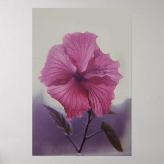 Backlit Hibiscus flower Print