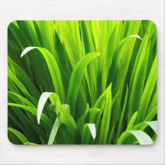 Backlit Leaves in Garden Mouse Pad