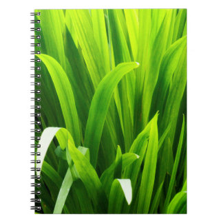 Backlit Leaves in Garden Notebook
