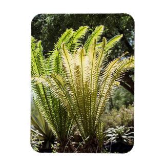 Backlit palms magnet