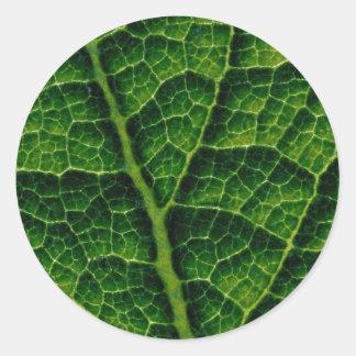 Backlit skunk cabbage leaf texture classic round sticker