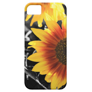 Backlit Sunflower with B&W iPhone 5 Cover
