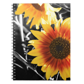 Backlit Sunflower with B&W Notebooks