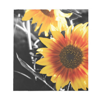 Backlit Sunflower with B&W Notepad