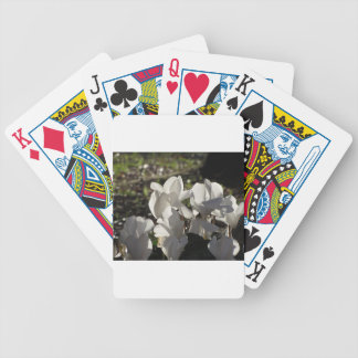 Backlits white cyclamen flowers on dark background bicycle playing cards